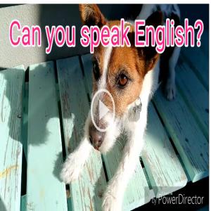 ★ルーチェが英語を猛勉強!?