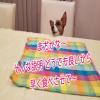 驚異の食いっぷり動画!?ルーチェ10歳!HAPPY Birthday !その➁