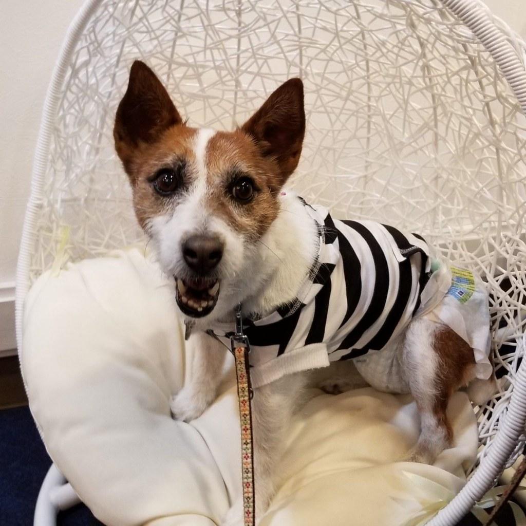 おすすめ!伊豆でペット可・犬連れで宿泊・食事OKな宿|Wan's Resort 城ヶ崎海岸